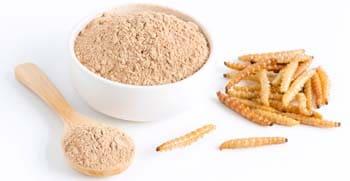 mejor proteina en polvo de insecto