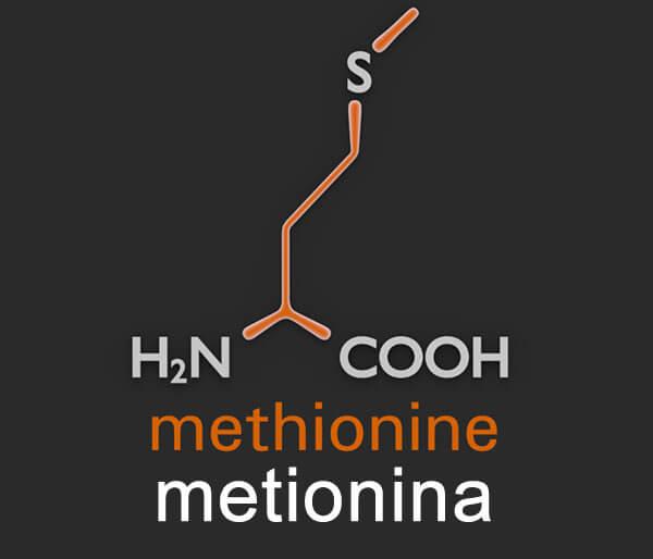 Metionina Met Qué Es Cuál Es Su Función Suplementos