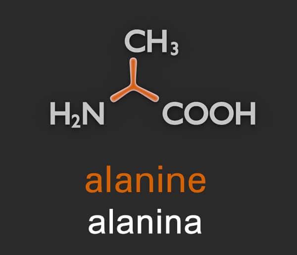 suplemento alanina en forma libre cual es su funcion